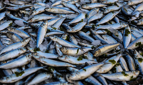 DEFRA: Marine Management Organisation - Designing new services for the fishing industry